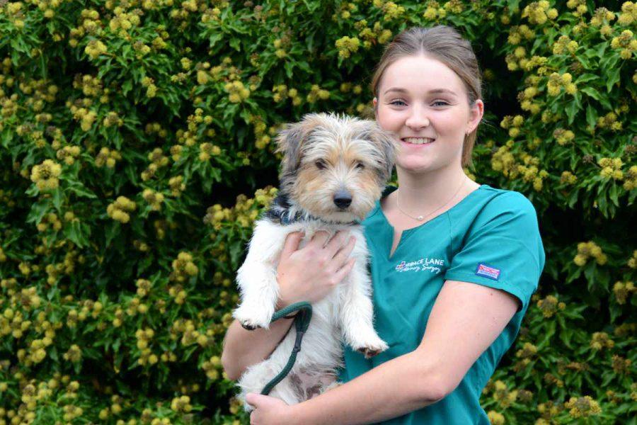 Grace Lane Vet vet nurse holding little terrier